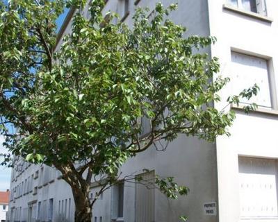 Vente Appartement 55 m² à Nantes 135 000 €
