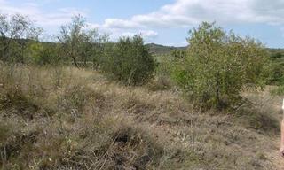 Achat terrain  Conilhac-Corbières (11200) 36 000 €