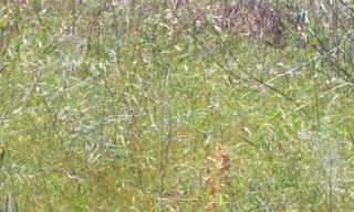 Achat terrain  Peyrins (26380) 70 000 €
